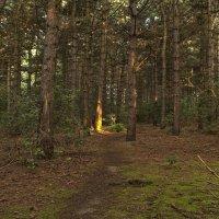 По лесу вдоль озёр :: Alexander