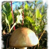 Первый грибок :: Евгения Глебова