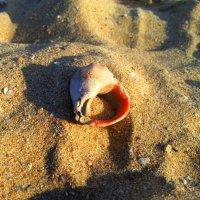 Находка на пляже :: LORRA ***
