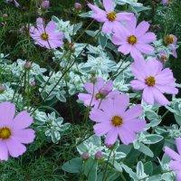 Цветы :: Ольга