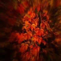 Пламенеют листья на закате... :: veilins veilins