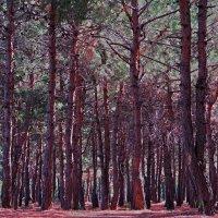 леса :: Валерий Дворников
