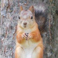 - Ну пожалуйста, угостите орешком!!! :: Наталья Пендюк Пендюк