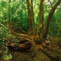 Заходи в волшебный лес, полный сказок и чудес... :: Лидия Цапко