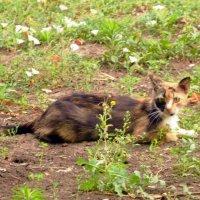 Страшнее кошки зверя нет :: Владимир Болдырев