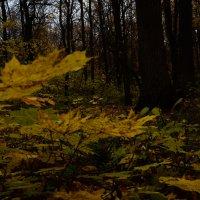 Осень :: Лилия Саванец