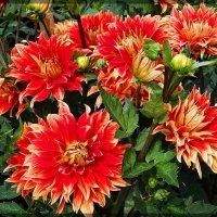 Цветы  из жаркого лета Фото 1 :: Владимир Бровко