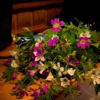 Полевые цветы :: Ксения Кузина