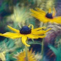 Садовые цветы :: Светлана Зайцева