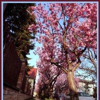 Розовая улица :: D D
