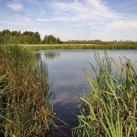 Озеро с дикими утками :: Любовь Потеряхина