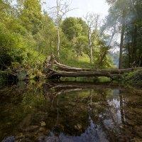 Лесной ручей и сломанное дерево :: Евгений Андреев