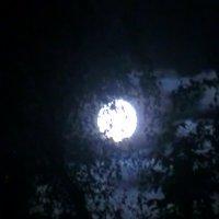 Сегодня ночью - СУПЕРЛУНА - фотографируйте, смотрите... :: Владимир Павлов
