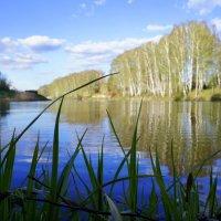 Любимое место на озере. :: Елена Прихожай