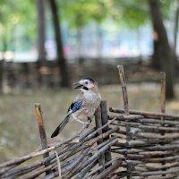Птица :: Варвара Бычкова