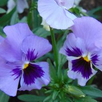 Цветок :: Vladikom