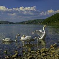 Лебединое озеро :: Алиса Терновая