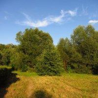 Вечер в парке IMG_3730 :: Андрей Лукьянов