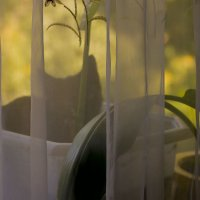 Засада в цветочном горшке :: Ольга Винницкая