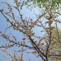 Мелодия весны. :: Валентина ツ ღ✿ღ