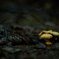 Под пологом леса. :: Дарья Даркина