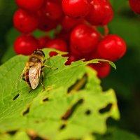 Летнее насекомое - осенние краски :: Анна Румянцева