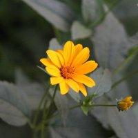 цветочек :: Иринка Руденко