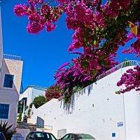 Тунис :: Stingerrr