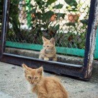 Коты :: Алёна Мамот