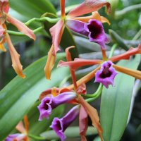 орхидеи 2 :: Olga