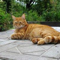 Этот милый рыжий кот... :: ТАТЬЯНА (tatik)