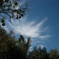 Небо, небушко... :: Светлана Миняева