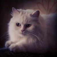 котэ :: NIKOLAY Nagaev