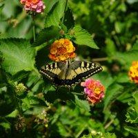 Бабочка :: Анатолий Толстопятов