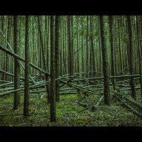 Чем дальше в лес..... :: Алексей Илюхин