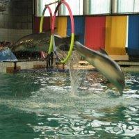 В дельфинарии :: Самохвалова Зинаида