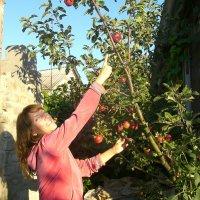 молодильные яблочки :: Татьяна Танюша