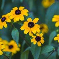 Солнце на цветах :: Николай Николенко