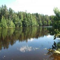 озеро в лесу :: нина полянская