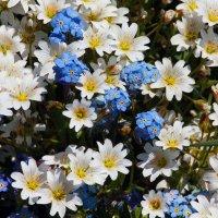цветы :: Dmitriy Sagurov
