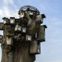 Птичий квартал... :: juriy luskin