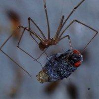 Паук и муха :: Алексей Ревук