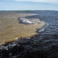 **Слияние двух рек, - Амазонка и Рио-Негро :: mikhail grunenkov
