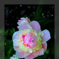 Ночные цветы 8 :: Владимир Хатмулин