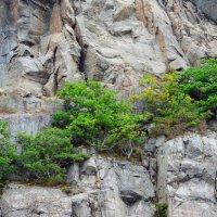 И на камнях растут деревья :: Николаева Наталья