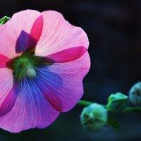 Цветок в конторовом свете :: Александр Горелов