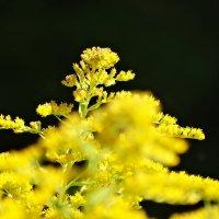 Что-то жёлтенькое желтеется... :: Владимир Гилясев