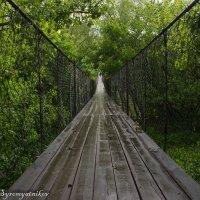 Подвесной мост через р. Дон :: Юрий Сыромятников