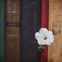Жизнь среди историй :: Катерина Регрут