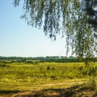 Фото из леса :: юрий Амосов